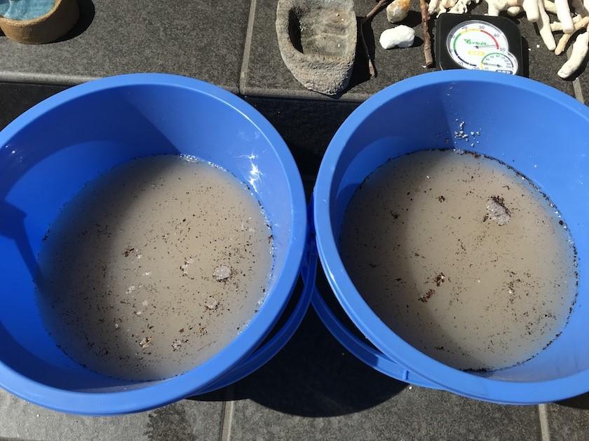 サンゴ砂の洗い方