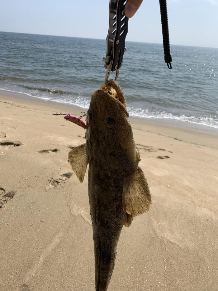 釣り上げたマゴチ