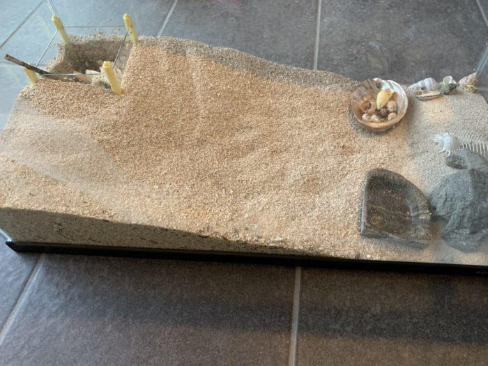 オカヤドカリ飼育 拭き終わった水槽