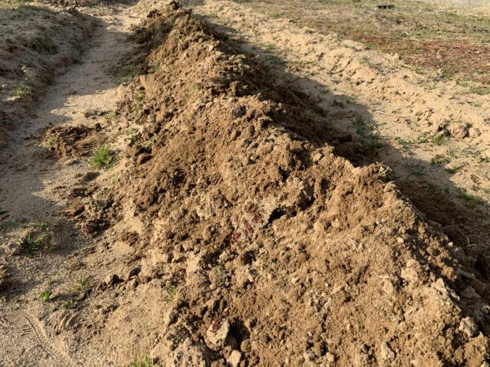 チョロギ栽培 - 畑を耕す