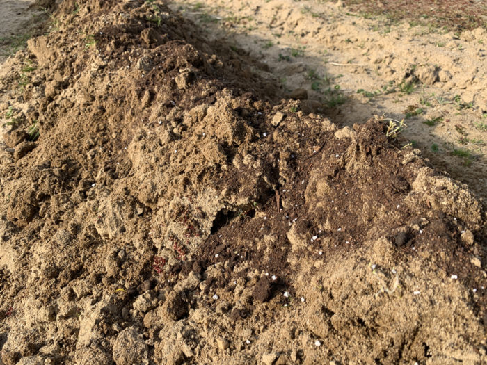 チョロギ栽培 - 肥料を混ぜる