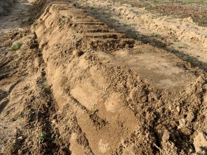 チョロギ栽培 -畝(ウネ)を作る