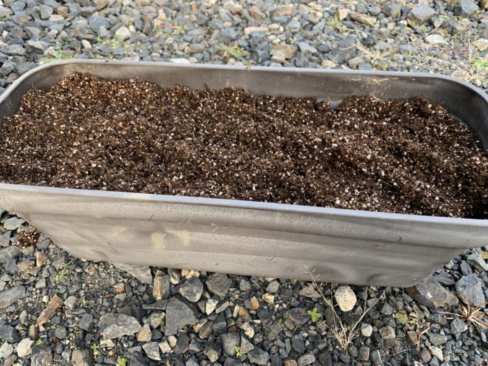 チョロギ栽培 - プランターに培養土を敷く