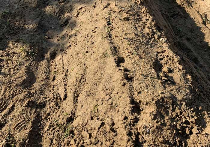 雑草を処理した後の畑