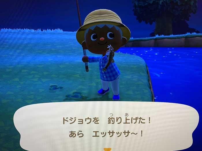 あつ森:釣り上げたドジョウ
