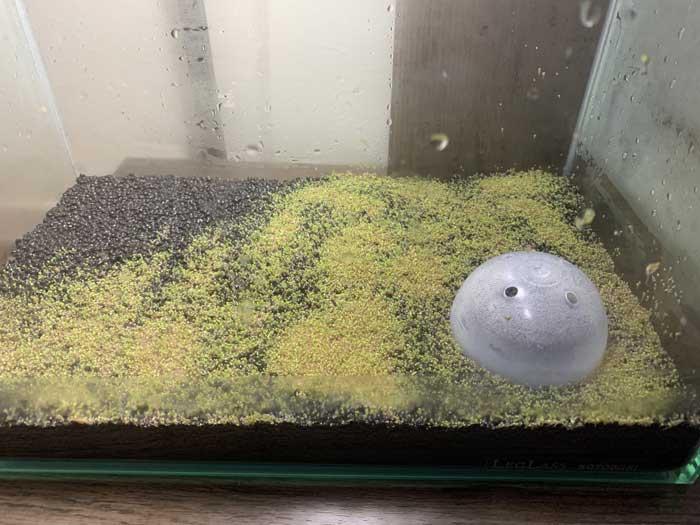 種を撒いてから丸3日で発芽